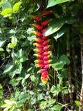 Blume im Regenwald von Peru Stockbild