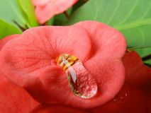 Blume im Rot Lizenzfreie Stockfotos