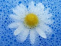 Blume im Schaumgummi stockfotos