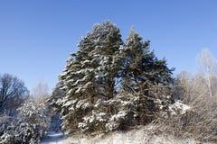 Blume im Schnee Lizenzfreie Stockbilder