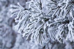 Blume im Schnee Stockfoto