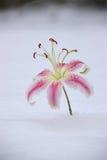 Blume im Schnee Stockbild