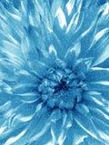 Blume im Schnee Lizenzfreies Stockbild