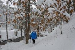 Blume im Schnee Das Jugendlichmädchen ist Trekking im Winterwald lizenzfreies stockbild