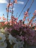 Blume im Sommer Lizenzfreies Stockfoto