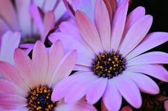 Blume im Sommer mit Mitte mögen Universum lizenzfreie stockfotos