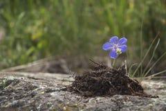 Blume im Stein Stockfotografie