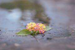 Blume im Stein und im Teich Stockbilder