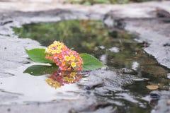 Blume im Stein und im Teich Lizenzfreie Stockfotos