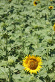 Blume im Sun Stockfoto