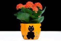 Blume im Vase. Lizenzfreies Stockbild