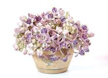 Blume im Vase Lizenzfreie Stockbilder