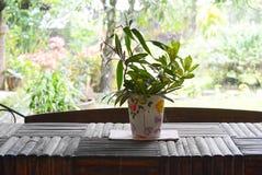 Blume im Vase Stockfoto