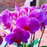 Blume im Vase mit Licht, Gefangennahme für Zukunft stockfoto