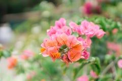 Blume im Wald Stockfotografie