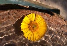 Blume im Wasser stockfoto