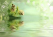 Blume im Wasser Lizenzfreie Stockfotografie