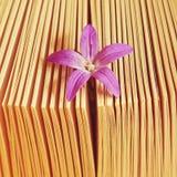 Blume innerhalb des Buches, warmer Sonnenuntergang Lizenzfreies Stockfoto