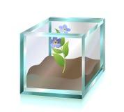 Blume innerhalb des Glaswürfels Stockfotografie