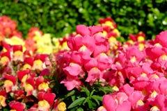 Blume ist colerful Hintergrund Stockbilder