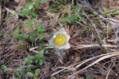 Blume ist das Schneeglöckchen lizenzfreies stockfoto