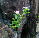 Blume leben auf dem Felsen lizenzfreies stockfoto