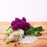 Blume lokalisierte lila Niederlassung Lizenzfreies Stockbild