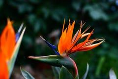Blume mögen ein Tier Stockfoto