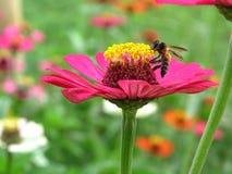 Blume mit Biene Stockfotografie
