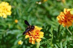 Blume mit Biene Lizenzfreies Stockfoto