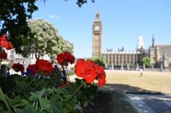 Blume mit Big Ben im Hintergrund Stockfotografie