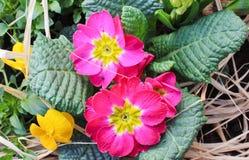 Blume mit Blatt und Gras Lizenzfreie Stockfotografie