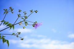 Blume mit blauem Himmel stockfoto