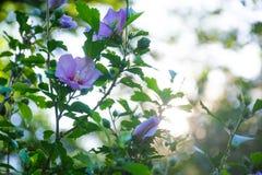 Blume mit Bokeh-Hintergrund Stockbilder