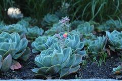 Blume mit der Knospe lizenzfreie stockbilder
