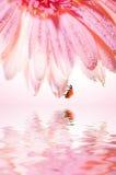 Blume mit einem Marienkäfer Stockfotos