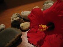 Blume mit Felsen Lizenzfreie Stockfotos
