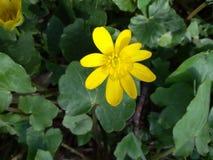 Blume mit grünem Blatt stockfotografie