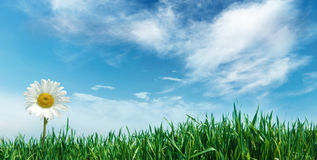 Blume mit Gras und Wolken Stockfoto