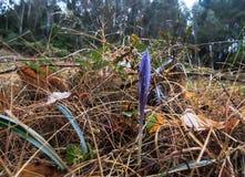 Blume mit Insekt lizenzfreies stockfoto
