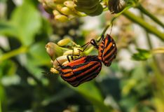 Blume mit Insekt stockbilder