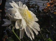 Blume mit Insekt lizenzfreies stockbild