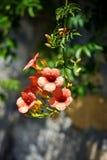 Blume mit langem Stamm Lizenzfreie Stockbilder
