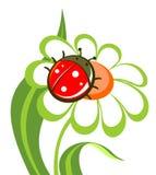 Blume mit Marienkäfer Lizenzfreies Stockfoto
