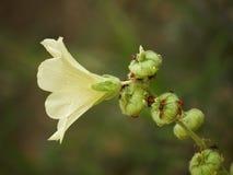 Blume mit Programmfehlern Lizenzfreies Stockfoto