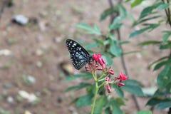 Blume mit Schmetterling Stockfoto
