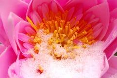 Blume mit Schnee Lizenzfreie Stockbilder