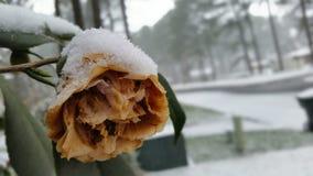 Blume mit Schnee lizenzfreie stockfotografie