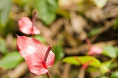 Blume mit sonderbarem Formmakro lizenzfreies stockbild