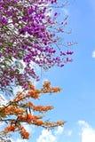 Blume mit sonnigem Stockfoto